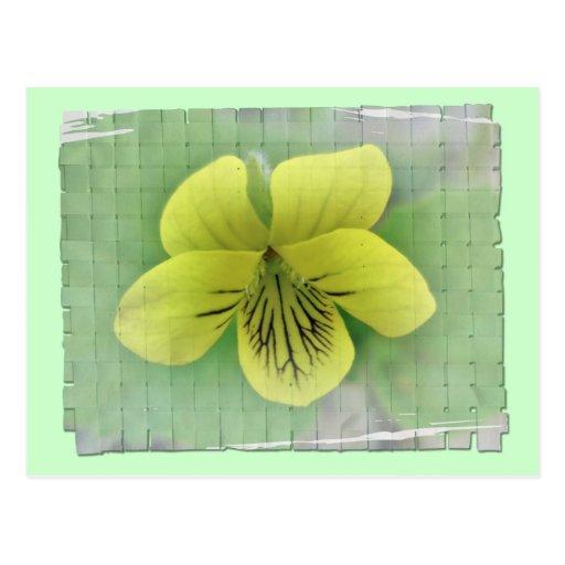 Artículos de coordinación violetas amarillos salva tarjeta postal