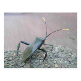 Artículos Hoja-Con base negros adultos del insecto Postal