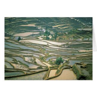 Asia, China. Las terrazas inundadas del arroz acer Felicitación