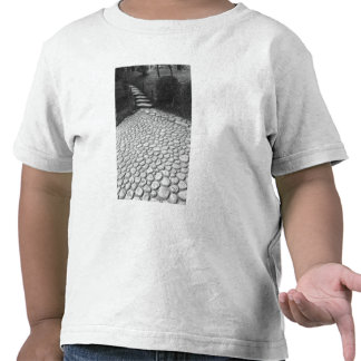 Asia, Japón, Hiroshima. Detalle de Shukkei, en Camiseta
