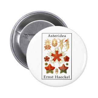 Asteridea de Ernst Haeckel Pin