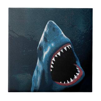 Ataque del tiburón azulejo