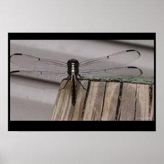 Aterrizaje de la libélula póster
