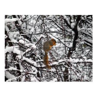 Atesore en la nieve 6167 postal
