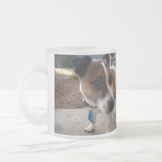 Atracción del fox terrier, taza del vidrio