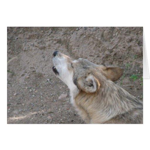 Aullido mexicano del lobo felicitación
