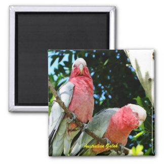 Australiano Galah - Cockatoo rosado Imanes