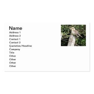 Australiano Kookaburra (familia del martín Tarjetas De Visita