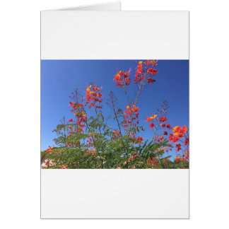 Ave del paraíso mexicana tarjeta de felicitación