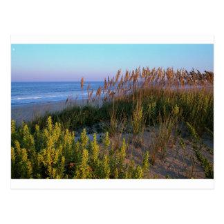 Avena del mar y anciano de la playa postal