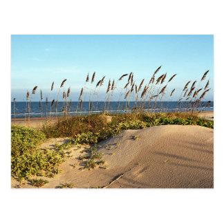Avena y dunas del mar postal