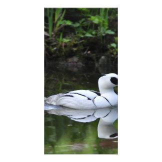 Aves acuáticas blancos y negros del pato de salto tarjeta fotografica personalizada