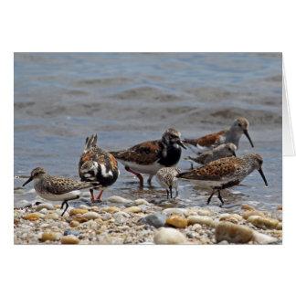 Aves costeras de la bahía de Delaware Tarjeta