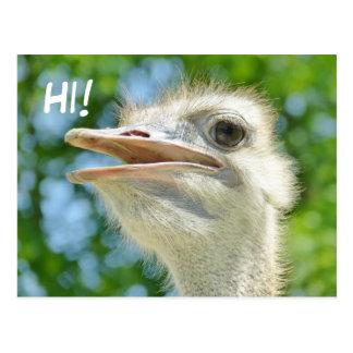Avestruz africana divertida - hola postal