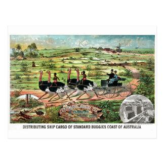 Avestruz del australiano de Vintage Columbus Buggy Postal