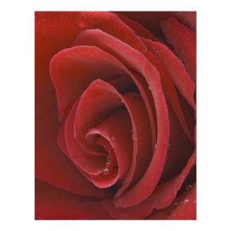 Aviador del rosa rojo folleto 21,6 x 28 cm