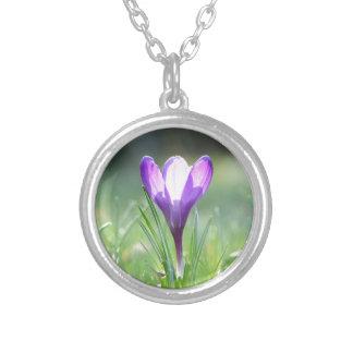 Azafrán púrpura en primavera collar plateado