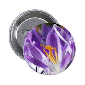 Azafrán violeta de la primavera chapa redonda de 5 cm