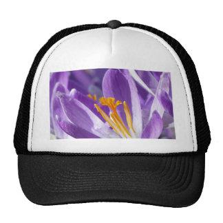 Azafrán violeta de la primavera gorras