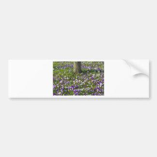 Azafranes del campo de flores en hierba de la pegatina para coche