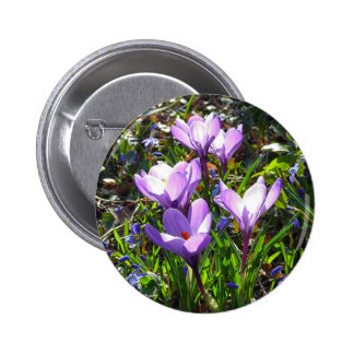 Azafranes violetas 02,0, saludos de la primavera chapa redonda de 5 cm