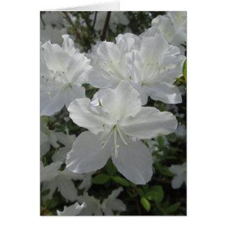 Azalea blanca tarjeta de felicitación