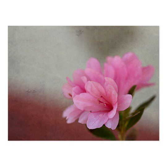 Azalea rosada texturizada postal