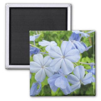 Azul de la flor del grafito imanes para frigoríficos