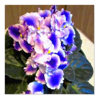 Azul de la violeta africana comunicado personal