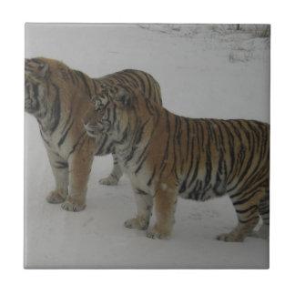 Azulejo Alquileres dos tigres siberianos