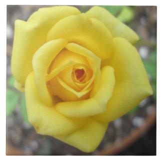 Azulejo Amarillo de la flor de la rosaleda mini