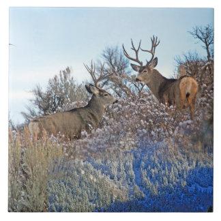 Azulejo Arte de la fauna del photoshop de la fotografía