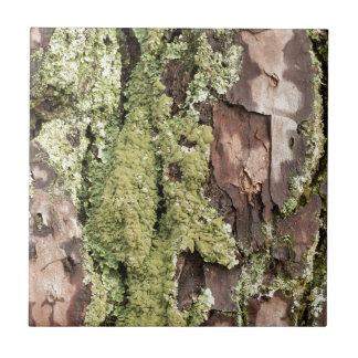 Azulejo Corteza de árbol de pino de la costa este mojada