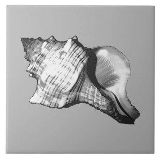 Azulejo De Cerámica Bosquejo de la cáscara de la concha - sombras de