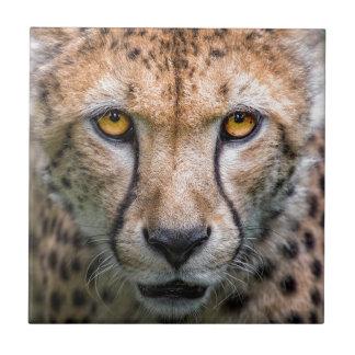 Azulejo De Cerámica Cabeza del guepardo