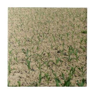 Azulejo De Cerámica Campo del maíz del maíz verde en primero tiempo