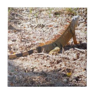 Azulejo De Cerámica Cazas anaranjadas de la iguana