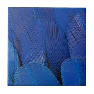 Azulejo De Cerámica Diseño azul de la pluma del Macaw del jacinto