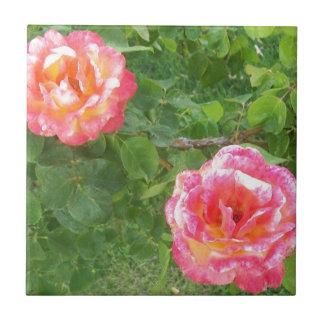 Azulejo De Cerámica Dos rosados y rosas manchados amarillos en verde