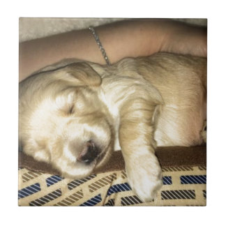 Azulejo De Cerámica El dormir de oro del perrito del Doodle