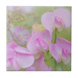Azulejo De Cerámica El guisante de olor florece el | Seabeck, WA