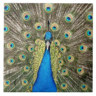 Azulejo De Cerámica El pavo real de Pedro empluma el Peafowl colorido