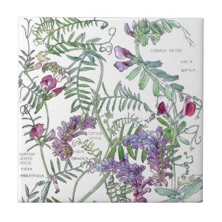 Azulejo De Cerámica El Wildflower botánico de la arveja florece la