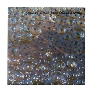 Azulejo De Cerámica Especie: Los huevos de amarran la rana