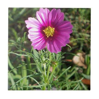 Azulejo De Cerámica Flor rosada oscura de la margarita del cosmos