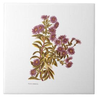 Azulejo De Cerámica Flores de la ciencia NZ del vintage - semidentata