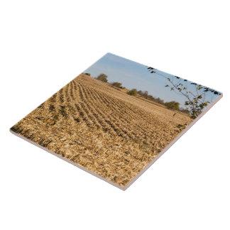 Azulejo De Cerámica Foto del panorama del campo de maíz de Iowa en la