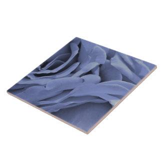 Azulejo De Cerámica Foto gris azul clara delicada de la flor de los