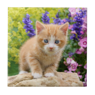 Azulejo De Cerámica Gatito mullido lindo del gato del jengibre en foto