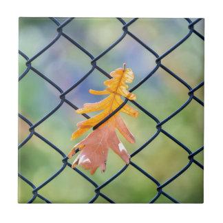 Azulejo De Cerámica Hoja de la caída cogida en una cerca